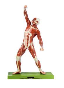 AS 3 Männliche Muskelfigur