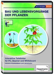 Bau und Lebensvorgänge der Pflanzen