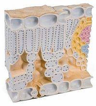 Blattstruktur, Blockmodell