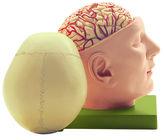 BS 5/2 Basis des Kopfes