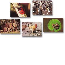 Fotokarten Tiere und Vögel