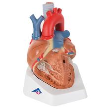 Herz, 7-teilig