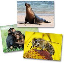 Klang- und Bilderbox Tiere