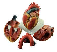 Organe