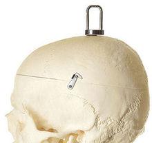 QS 10/10 Künstliches Homo-Skelett