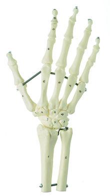 QS 31/7 Handskelett mit Unterarmansatz (Elastische Montage)