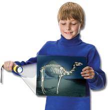 Röntgenbilder Tiere