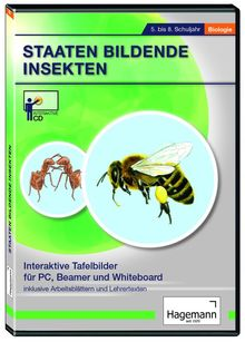 Staaten bildende Insekten