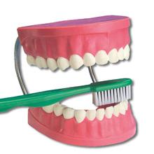 Zahnpflege-Modell