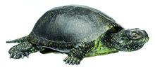 ZoS 1025 Europäische Sumpfschildkröte, Männchen