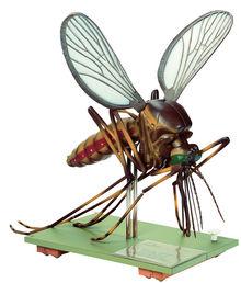 ZoS 48/5 Modell einer Stechmücke