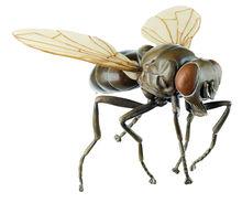 ZoS 49/31 Fliege